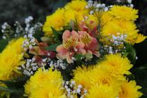 Flores-De-Colores (24).JPG