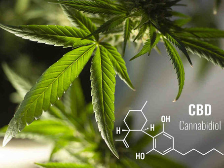What are the Differences Between CBD and THC?