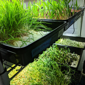 Geoponica Greens - Grow Rack (Multiple Species)