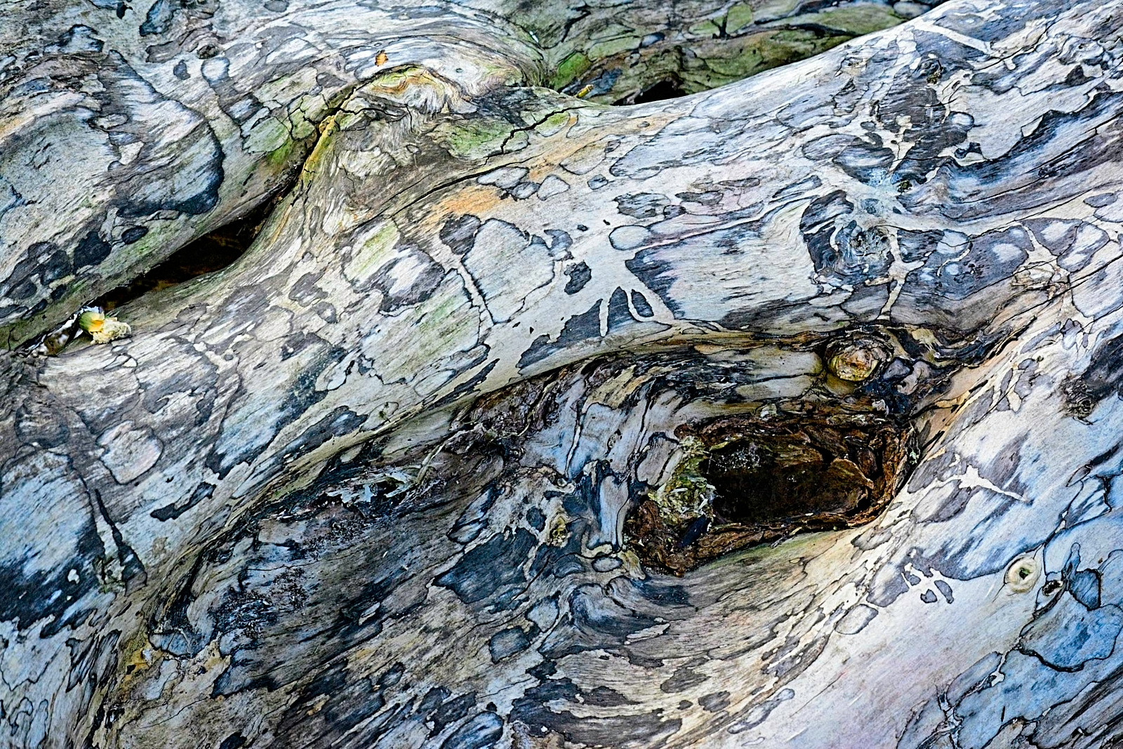 Natural Abstract MRS_3693