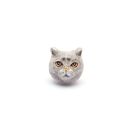 British Shorthair CHARM