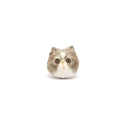 Persian cat CHARM,Grey eye