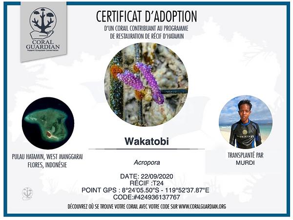 Certificat d'adoption Corail.png