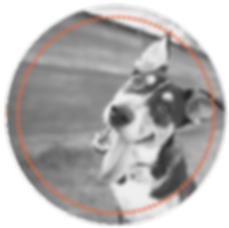 Dog in Circle for Shelter Share.png
