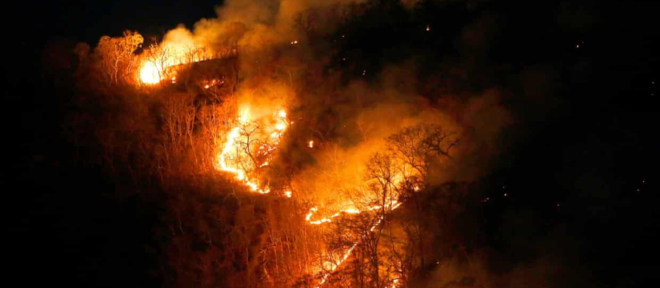 Amazon Fires Set Illegally For Crops, Cattle and property speculation