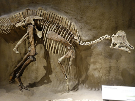 Scientists Say It's Possible to Find Dinosaur DNA