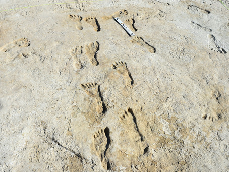 The Oldest Known Human Footprints in North America Were Discovered