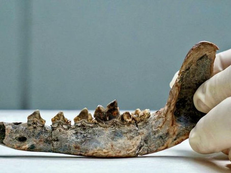 Remains of a 12,000-Year-Old Dog Rewrite Central American History Of Human Presence