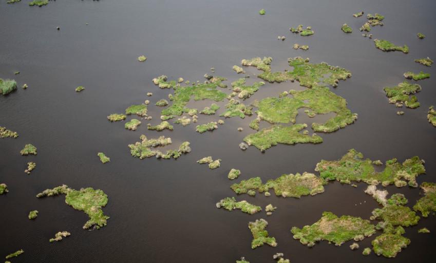 Degraded marshland