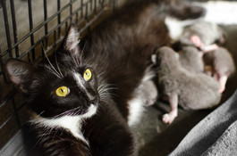 Sienna and her kittens