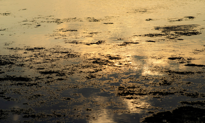 Liquid gold marsh