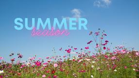 Summer Season Tarot Cards