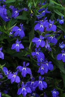 Lobelia, Magadi Basket Dark Blue