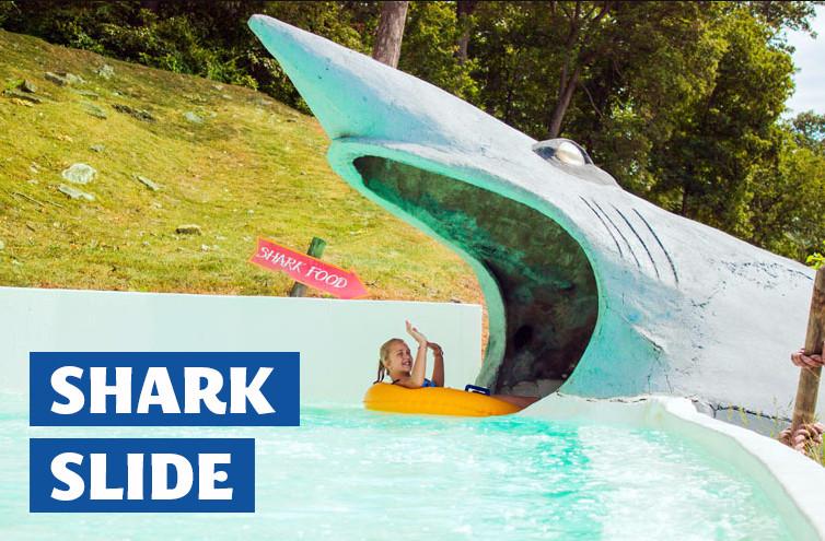 Shark Slide.jpeg