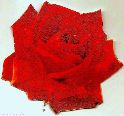 single rose brite.jpg