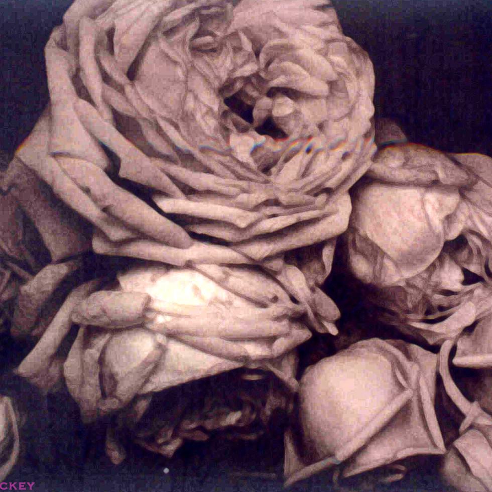 Heavy Roses B+W photo-02.jpg
