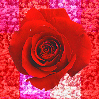 Rose Window-02.jpg