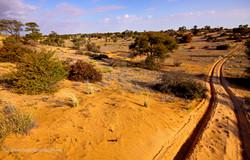 Kgalagadi Dune Trail