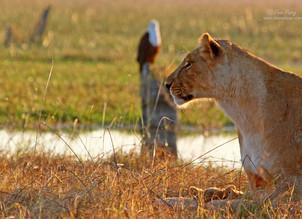 Magical Northern Botswana