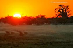 Kalahari Baobab Sunset Trail
