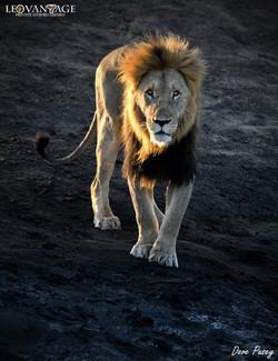 Side lit King