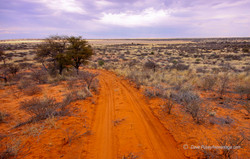 Red Sand Trail