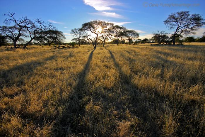 Land of long shadows