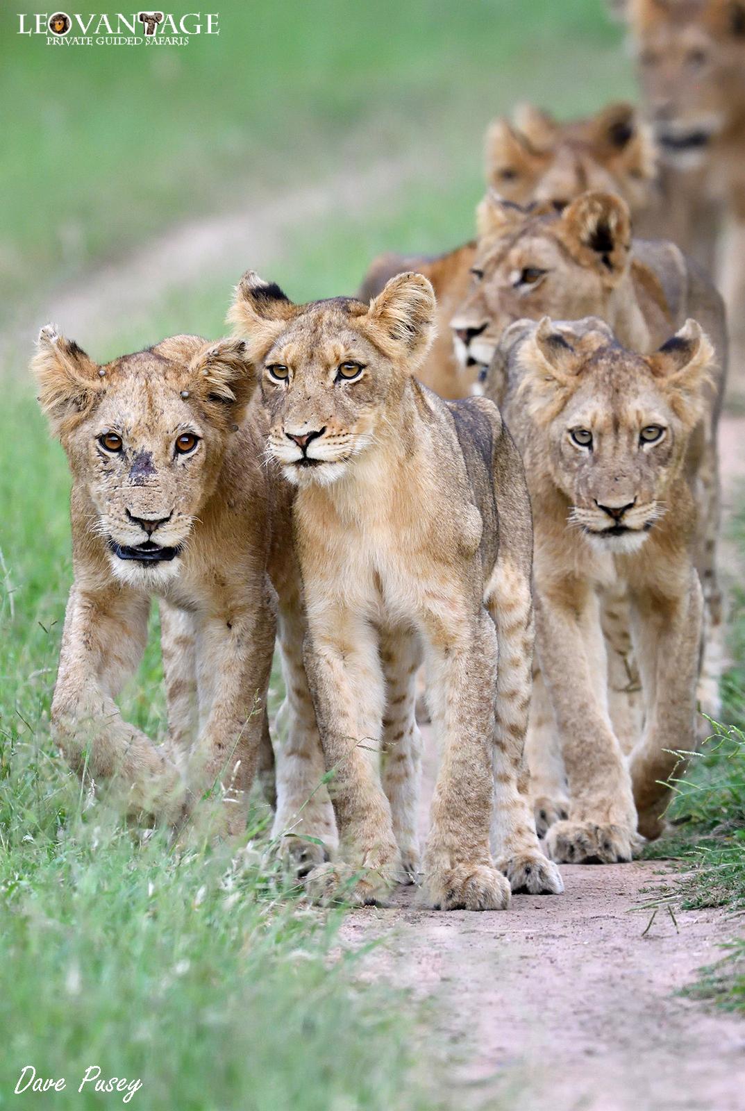 Future leaders of the pride