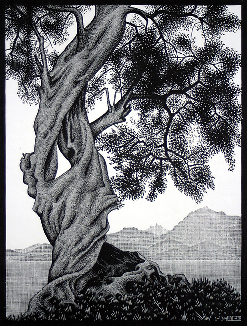 Old Olive Tree, Corsica