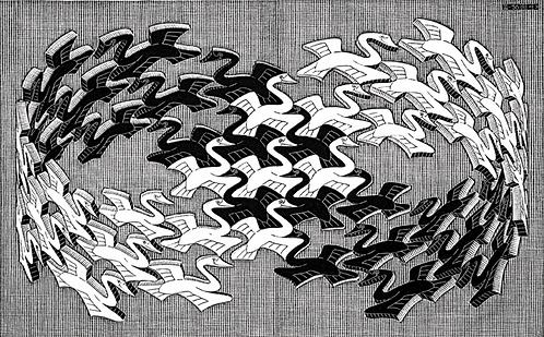 Swans (White Swans, Black Swans)