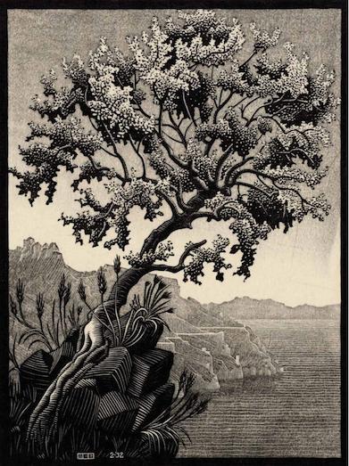 Carubba Tree (Ravello)