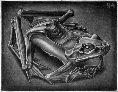 Mummified Frog