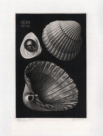 362 shells.jpg