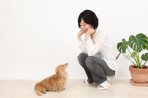 JPMA  (一社)日本ペットマッサージ協会  取材・イベントのご依頼