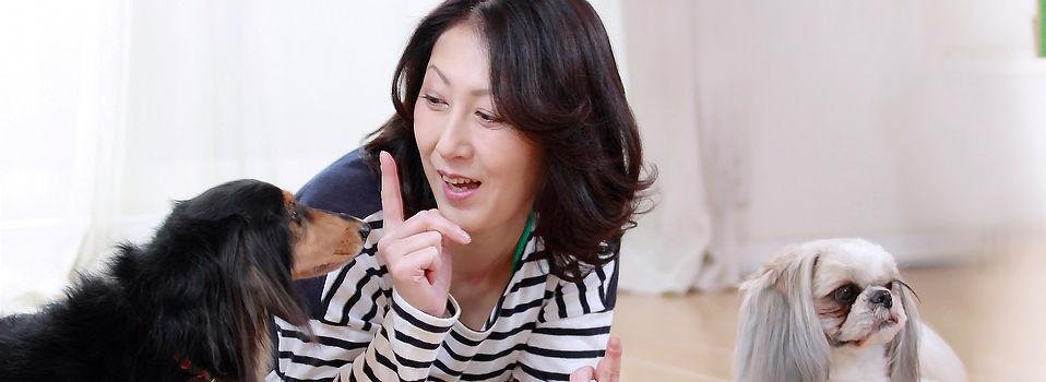 JPMA(一社)日本ペットマッサージ協会 FAQ よくあるご質問
