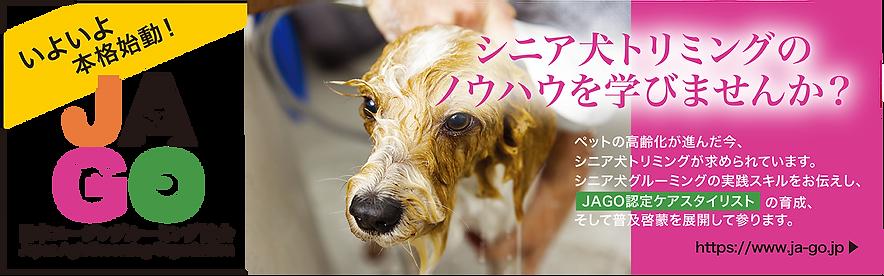 JAGO日本エージングルーミング協会|シニア犬トリミングを学びませんか?