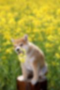 日本アニマル フィトセラピー学術協会 緑のクラフト講座