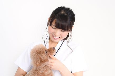 再受講制度 JPMA(一社)日本ペットマッサージ協会