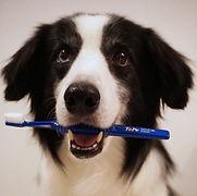 TVチャンピオン稲垣亜衣の犬の歯磨きレッスン『HAPPINESS DOG』