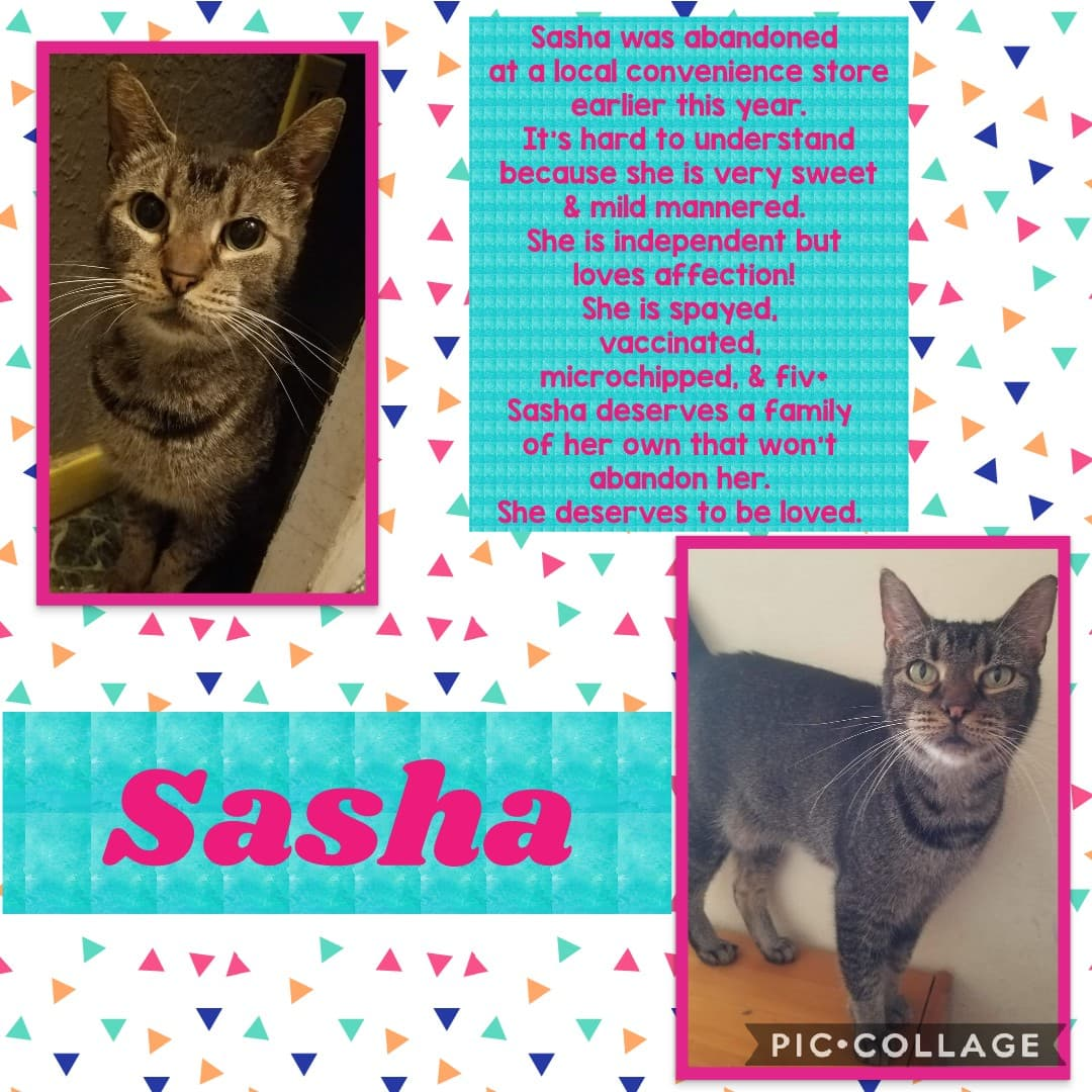Adoptable Cats | Critter Shack Rescue San Angelo Texas