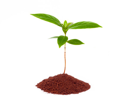 Why Use Coffee Grounds for Gardening