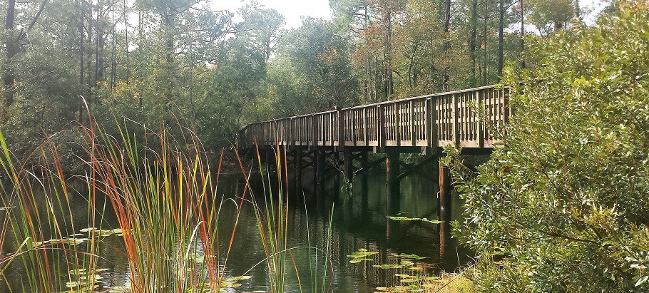 bridge across pond in a forest