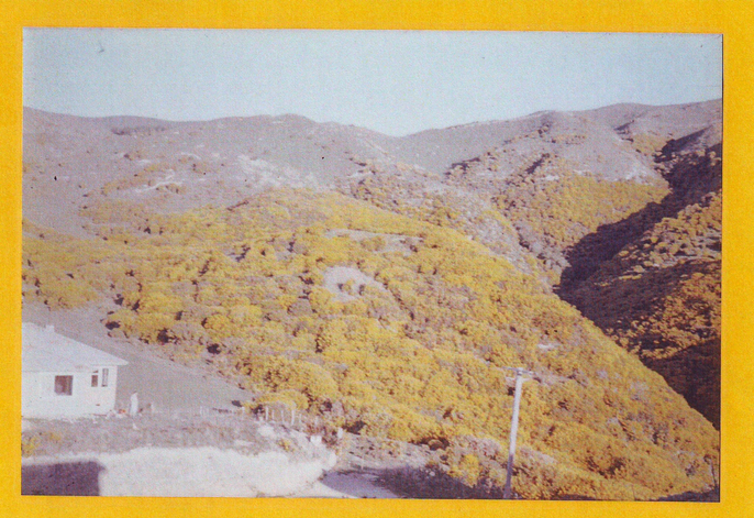 School Site in the 60s – before the extension of Raroa Terrace