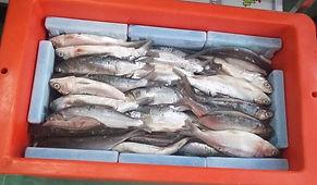 Pedingin Ikan Terbaik