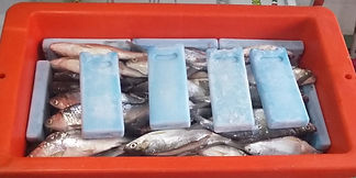 Pendingin terbaik untuk ikan