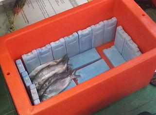 Cara pakai ice pack untuk ikan