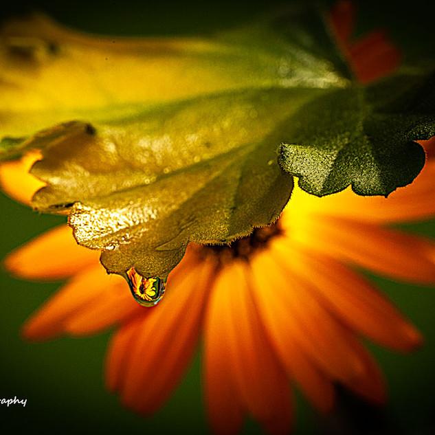 Last-Drop-of-Rain.jpg