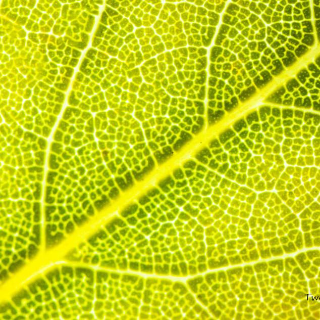 Life-of-the-leaf.jpg