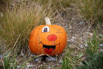 Halloween im Zoo