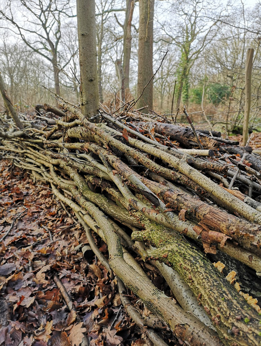 Interwoven branches - inspired by nature